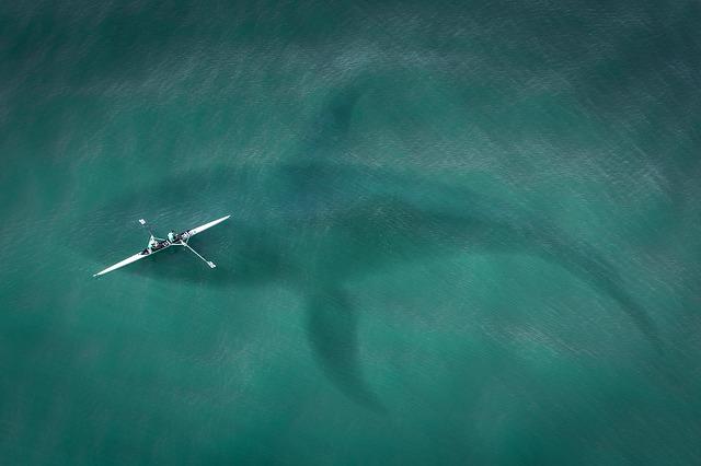 Žralok pohľad zhora.jpg