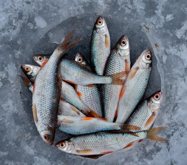 Malé rybky poukladané v ľade