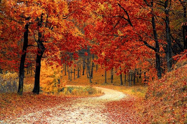 jesenná krajina.jpg