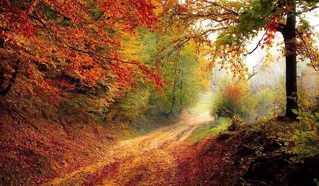 jeseň v lese.jpg