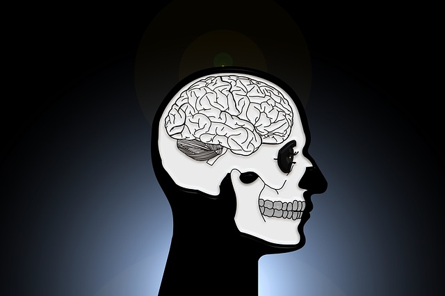 lebka a mozog.jpg