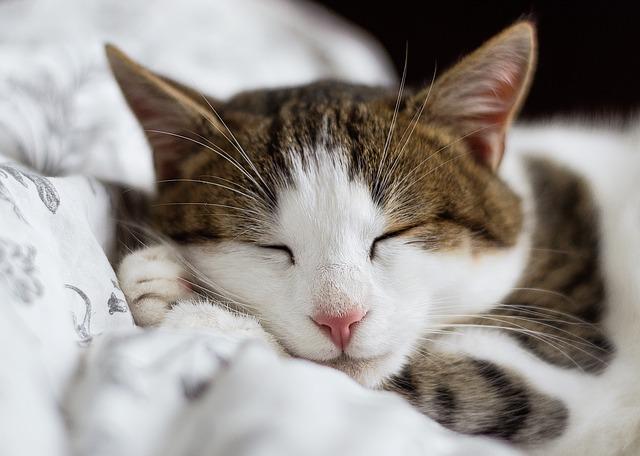 spiaca mačka.jpg